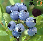 proanthocyanidins bilberry concentrate anthocyanidins