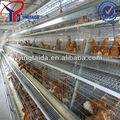 couche chiken cage de volailles