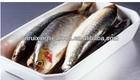 Frozen Whole Sardine ,sardine