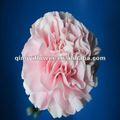 suministro de alto grado de flores cortadas de kunming