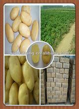 Authenticated GAP Newest Crop Spunta Potato