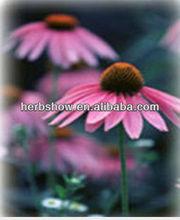 Echinacea Purpurea Extract 4:1