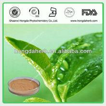 100% Pure Natural Green Tea Powder Extract