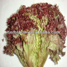 Purple lettuce seed/Loose leaves lettuce
