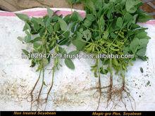 agricoltura biologica per gli impianti che stimolare la crescita delle radici