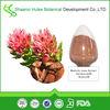 Factory Bulk Supply Rhodiola Rosea P.E. Salidroside 3%