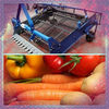 Large output Sweet Potato Harvest Machine with stable performance