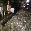 tilapia feeds 40% protein animal feeds