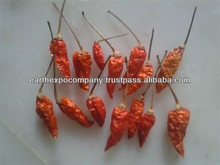 dried red chilli spices