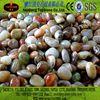 iridescent glass pebbles