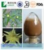 natural plant extract tribulus terrestris Saponins 20-98%/tribulus terrestris extract Powder/tribulus terrestris extract