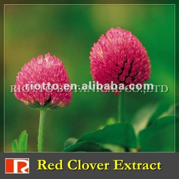 red clover extract powder (Isoflavone 2.5%-40%)