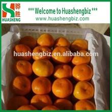 Top quality fresh honey mandarin