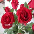 Bulkware große, rote Rose aus China, frisch geschnitten