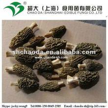 dried wild mushrooms, wild morel