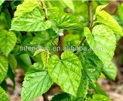 herbal extract,Plant extract-Mulberry Leaf Extract, DNJ 1%-4%