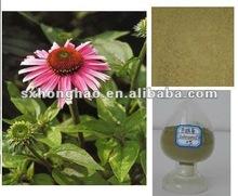 Pure Natural Brown-greenish Powder 4% Cichoric Acid HPLC Cichoric acid Echinacea Angustifolia Extract
