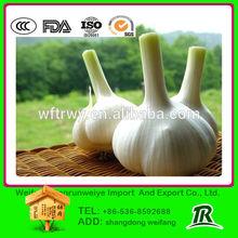 2015 fresh natural garlic