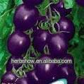 Purple Tomato Seeds