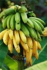 Varieties of Banana