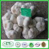 exporting grade small packing fresh pure white garlic