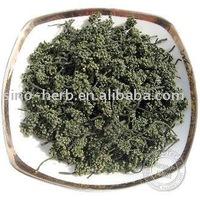 Traditional Chinese Herb Herbal Tea Works Effective Flos Notoginseng Sanchi Flower
