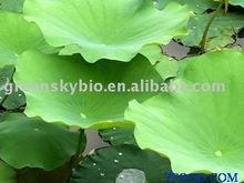 Lotus Leaf Extract 10:1
