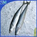 ensemble de fruits de mer congelés filets de maquereau espagnol poissons alimentaire de gros