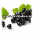 black currant extrait