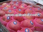 Pre-sale Yantai Fuji Apple Fruit Crop.2014