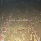 Automatic Broiler Chicken Breeding Equipment
