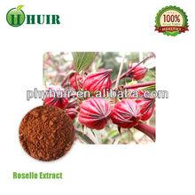 Flores secas roselle, hibiscus, rosa chá da flor