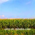buena calidad del maíz ensilado