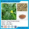 Total Saponins/Tribulus terrestris extract