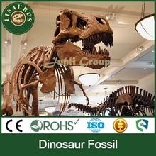 JLDF-0079 Fiberglass Sculpture Of Sciences Skeleton Dinosaur Fossil