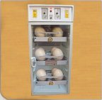 Large incubator For Ostrich Egg