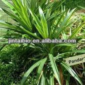 high quality Pandan Leaf Extract Powder