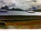 Poultry Farm - Aluminium Roofing 11C Profile