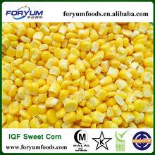 Importers Of Frozen Sweet Corn