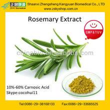Antioxidant Rosemary Extract Powder
