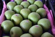 fresh apples / NEW SEASON 2012-2013