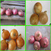 [factory]export CHINA types of onions for cooking