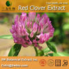 100% Natural Red Clover Extract for Healthy life