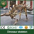 Jldf- 0636 fossili di dinosauro esemplari per mostra dinosauro