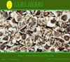 moringa plant seeds farms in india