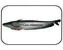Boal Fish Gutted - Wallago attu