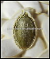 Primas comestibles de semillas de calabaza, tipo de blanco