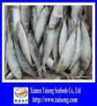 bloque de helado de pescado sardina entera