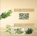 Gardenia/andrographis/platycodonis/corydalis/ganoderma/cordyceps
