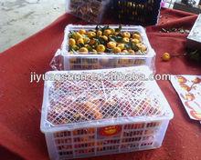 Chinese fresh sweet mandarin with leaves